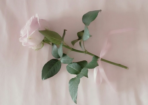 リボン 花