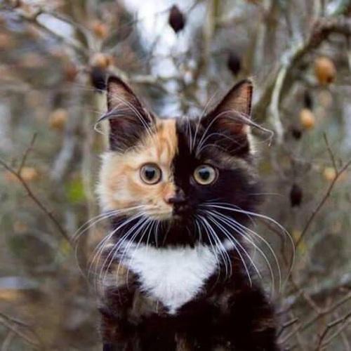 猫 ハーフ