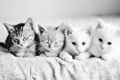 シェーディング 白黒 猫