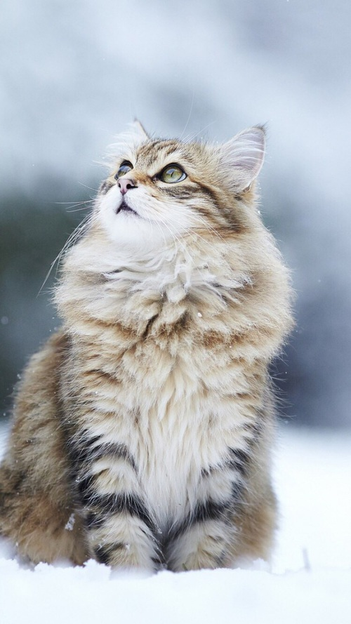 猫 見上げる