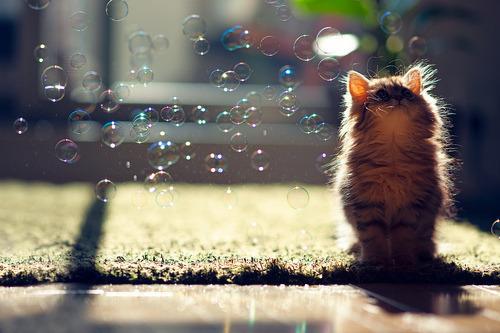 猫 シャボン玉