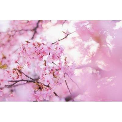 【全部プチプラ】春メイクに使いたいピンクカラーコスメ特集♡