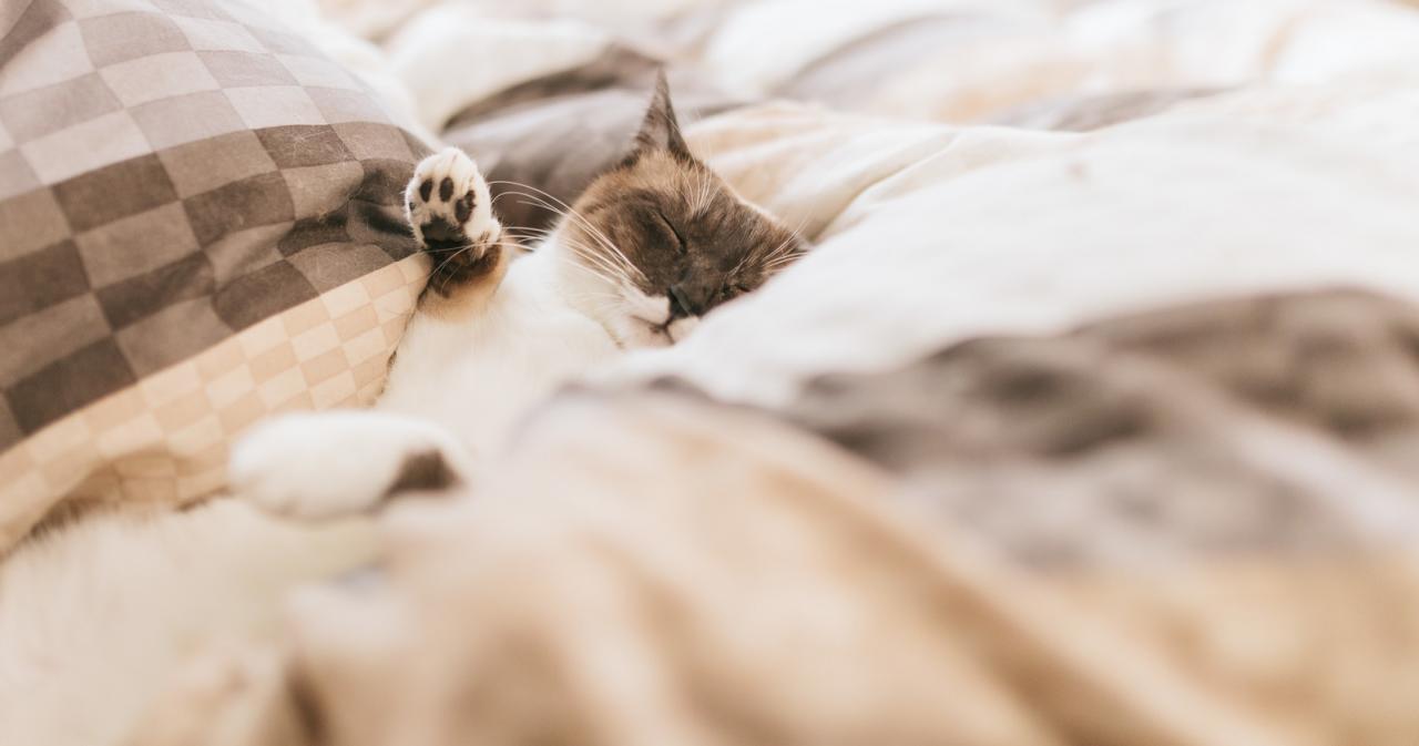 寝る前 アイプチ