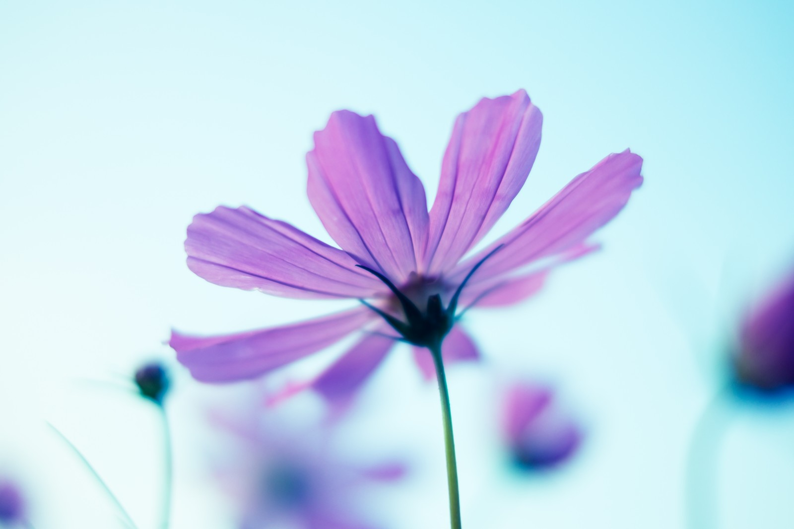 パープル 花