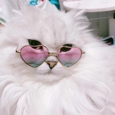 プチプライスで猫メイク♡簡単&可愛いを叶えるコスメたち