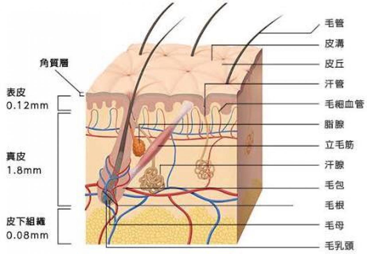 K-パレット ラスティングハイカバーコンシーラーティント とは 口コミ 角質層