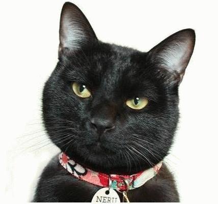 黒猫の画像 p1_31