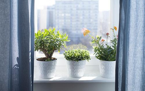 窓辺 植物