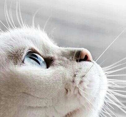 ねこめ 猫