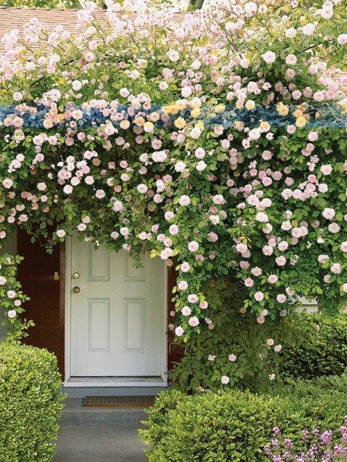 風景 ドア 花