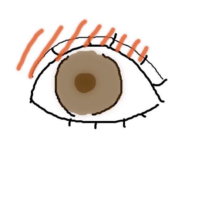 ビューラーで上まつ毛、下まつ毛をあげます。 オレンジの部分をブラウン→ベージュのように上に向かってグラデーションにします(ブラシを使うと◎)
