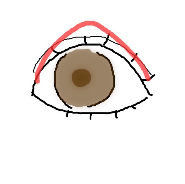 アイシャドウはベージュ~ブラウンの色をグラデーションになるように塗ります。 ここでポイント!赤い線のように山の形っぽく塗ることを意識してください。