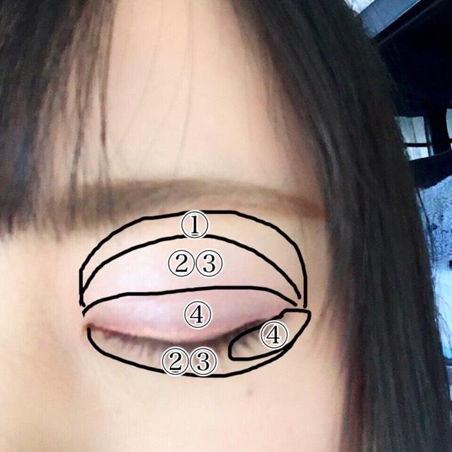 如圖所示依序塗上①〜④的眼影。