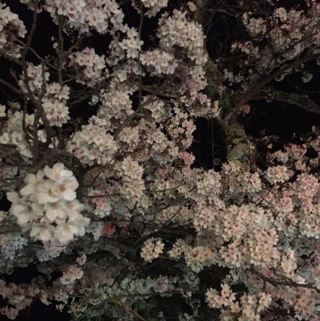 最後にトップコートを塗って完成です。 ちなみにこの写真は私が昨日見てきた夜桜です。綺麗でした。