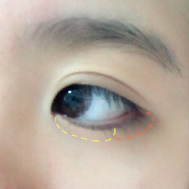 涙袋の目頭から黒目の終わりくらいまで②を塗り、そこから目尻まで④を塗ります。シャドウの境目はチップかブラシでぼかしてください!
