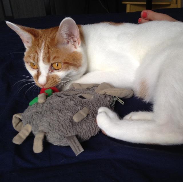持ちは…普通かな!フィルムタイプなので、こするとポロポロとれます。 うちの猫です。