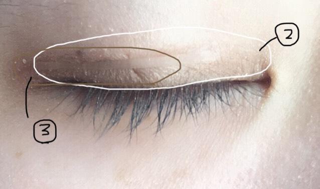 ①をアイホール全体に ②を二重幅より少し広めに ③を黒目から目尻にかけて 図のようにそれぞれぬります。