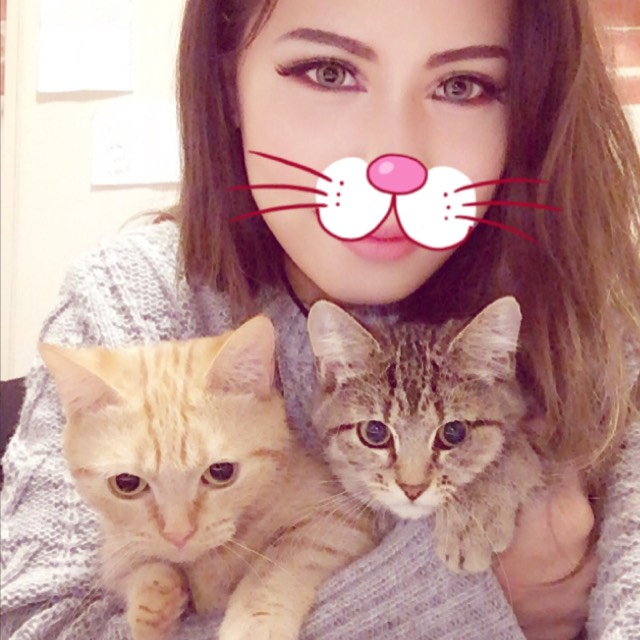 可愛い 猫達