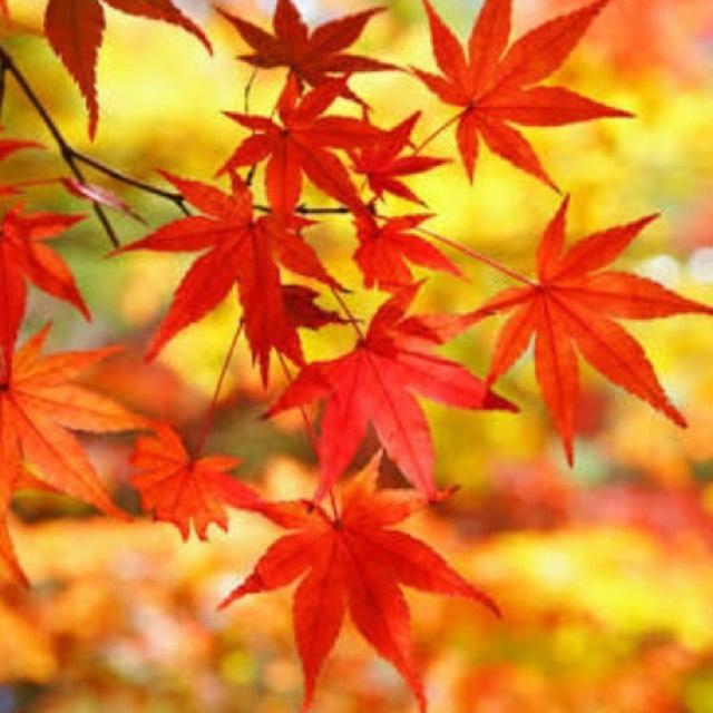秋限定!紅葉メイク
