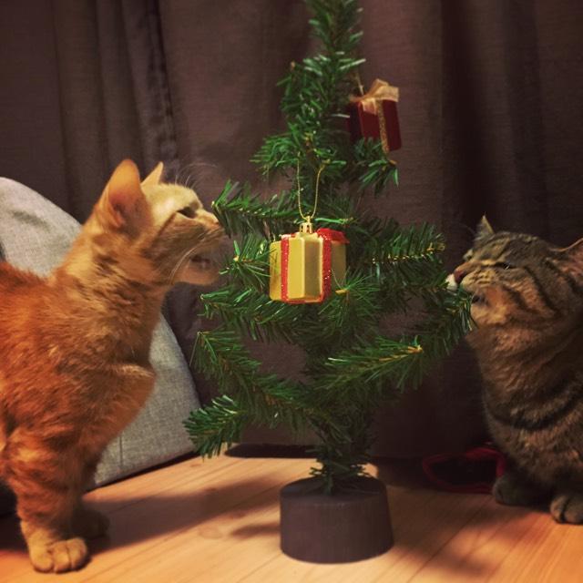 そしてみんな クリスマス楽しんでね^_^ 近いうちにクリスマスメイクでもしようかな