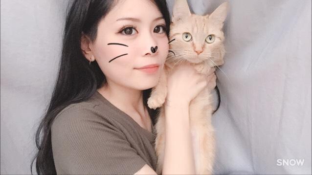 母猫  プリニー  マンチカン とにかくメチャ凶暴です。ちょーだいちょーだいがとっても上手です。基本的に猫パンチは手が短いのでとどきません