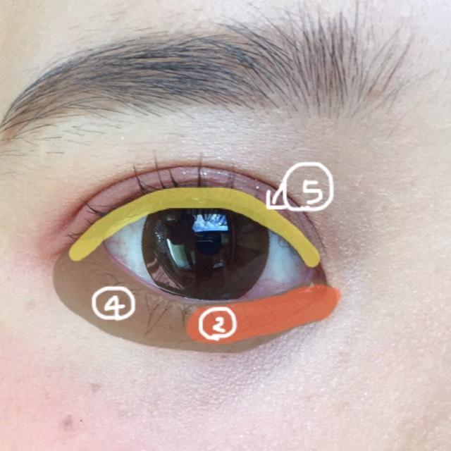 涙袋全体に広めに④をぬり、目頭部分に細く薄く馴染ませるように②を塗る。 細いブラシに⑤をとりポンポンとまつげの間を埋めます