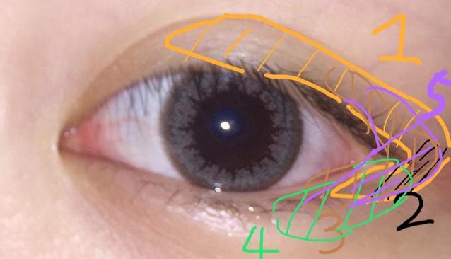 めちゃくちゃ見づらいですが 目頭には白系ののアイシャドウで1番とぼかし、2番は指でポンポンと少し付けるぐらい 3番あたりからひたすら他の色と馴染ませる感じです