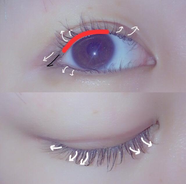 しっかり上がったら中間→毛先を何回か繰り返してくるんとカールさせます  このままだと真ん中にしかボリュームがでないので、ビューラーを小刻みに動かしながら目頭側、目尻側をカールさせていきます