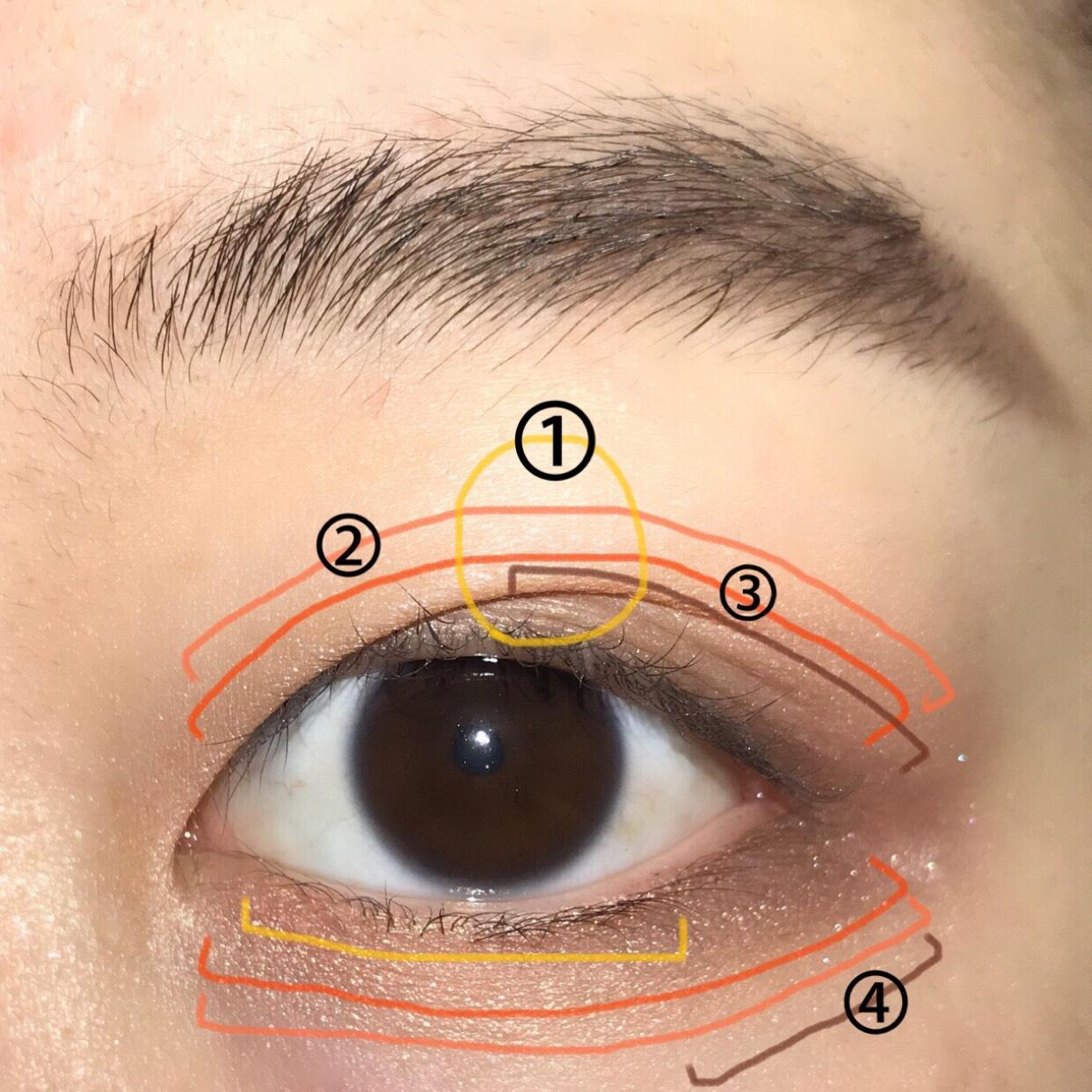 そして、YSLのアイシャドウの左上のベージュコーラルカラーを②の部分(アイホール全体と下まぶた全体)に。 左下のコーラルカラーを③の部分(上瞼の二重幅少し広めと下まぶた全体)に♪ 締め色に右下のブラウンカラーを④の部分(上瞼の目尻から中心にかけてと、下瞼1/3)に入れます☺︎ 最後に、右上の大粒のキラキラのラメを①の部分(涙袋と上瞼の中心)に入れます…♡